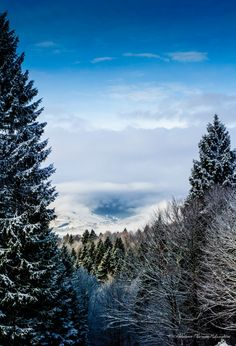 High up in the hills of the Altopiano di Asiago(High plateau of Asiago)the world opens up and on a clear day the views are spectacular. I loved the tunnel vision effect into the distant valley that my lens captured between the huge pine trees that surrounded me.
