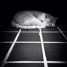 Stuart, The Neighborhood Cat