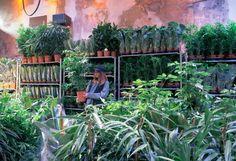 Grande Vente de Plantes #4 December 16 - December 17