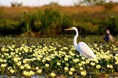 Esteros del Iberá. Bird, Exterior, Animals, Indoor Plants, Shrubs, Birds, Tourism, Argentina, Culture