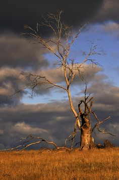 ˚Old tree
