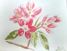 original magnolia watercolour print, pink flowers, mother's day by Quinn Lockman DesignandArtwork