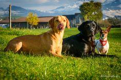 unsere Hunde www.bilderzirkus.ch Dogs, Animals, Good Photos, Animales, Animaux, Animal Memes, Animal, Pet Dogs, Dog