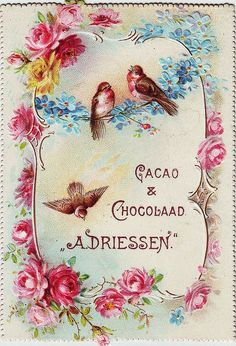 Cacao and Chocolaad Driessen