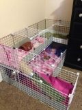 website with guinea pig cage ideas