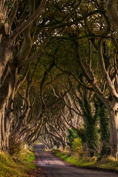 The Dark Hedges, Northern Ireland (by  Maximilian Pilz)