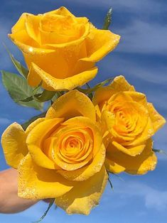 Beautiful Rose Flowers, Amazing Flowers, Diy Flowers, Flower Vases, Beautiful Flowers, Lavender Roses, Yellow Roses, Birthday Wishes Flowers, Gothic Garden