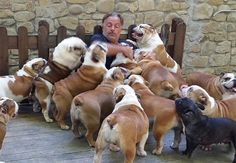 I want this to be me! Surrounded by bulldogs