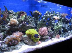 180 gallon reef tank   Saugus, CA