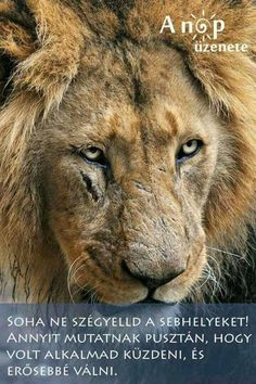 Lion with scar Scar Lion King, Lion Quotes, Lion Love, Warrior Quotes, Badass Quotes, Spirit Animal, Big Cats, Animals And Pets, Wild Animals