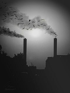 ::    ::  I live in a city where birds love a polluted air ..    ::  Well, enjoy April Fool's Day :/    ::     Food, Air, and Water are many times toxic....WHY?