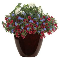 Proven Winners - Blue My Mind® - Dwarf Morning Glory - Evolvulus hybrid blue blue-true plant details, information and resources. Outdoor Flower Planters, Outdoor Flowers, Flower Pots, Container Flowers, Container Plants, Container Gardening, Landscaping Near Me, Luxury Landscaping, Blue Plants