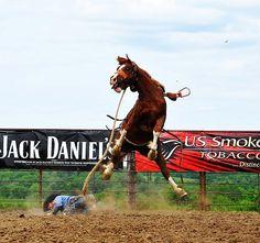 Extraordinary photo.... 2012 FREE RIDE BUCKOUT   Three Hills Rodeo