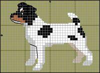 Jack Russell Terrier (3-färgad)