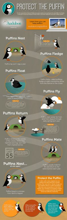 Protect the puffin