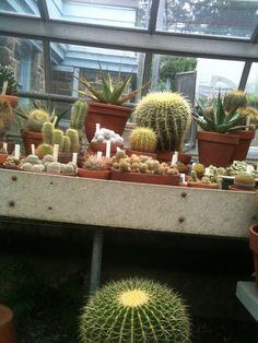 Aquarium, Plants, Goldfish Bowl, Fish Tank, Planters, Aquarius, Plant, Planting