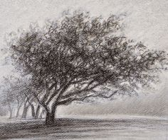 Tree in Fog Charcoal Water, Bongs, Mists, Snow, Drawings, Inspiration, Painting, Outdoor, Image
