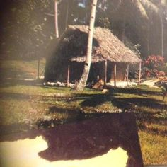 Housing of yester years on the island of Niue, called a 'fale pola' made from the coconut leaves that has been plaited.