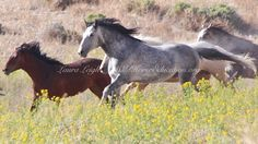The week at Wild Horse Education; lesson, learn, liberate By Laura Leigh on March 4, 2017