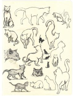 A trip to Europe with Lauren Castillo and her sketchbooks ~ City Cats.