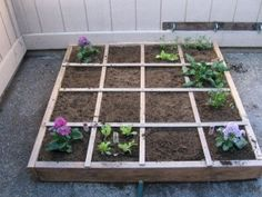 Apartment Gardening in 4 Square Feet (in Winter)