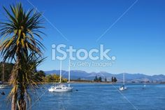 Looking up the Mapua Estuary, Nelson, New Zealand. New Zealand Landscape, Tree Images, South Island, Image Now, Looking Up, Cabbage, Coastal, Royalty Free Stock Photos, Beach