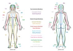 MERIDIAN SYSTEM CHART - Female body with principal and centerline acupuncture meridians - anterior and posterior view - Traditional Chinese Medicine. - Buy this stock vector and explore similar vectors at Adobe Stock Yin Yoga, Hormon Yoga, Yoga Meditation, Ayurveda, Anterior Y Posterior, Meridian Lines, Meridian Energy, Yoga Video, Mudras