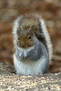 Squirrels symbolize activity and preparedness.