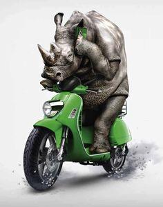 biker rhino Rhino Art, Giraffe, Elephant, Save The Rhino, Artemis, Beast, Biker, Weird, Africa