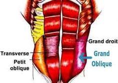 abdominaux obliques