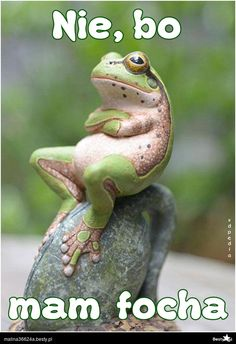 Animals Discover Funny pictures about Critic Frog. Oh and cool pics about Critic Frog. Also Critic Frog photos. Beautiful Creatures Animals Beautiful Majestic Animals Animals And Pets Baby Animals Baby Cats Cutest Animals Funny Frogs Cute Frogs Beautiful Creatures, Animals Beautiful, Majestic Animals, Unique Animals, Animals And Pets, Baby Animals, Baby Cats, Baby Sloth, Funny Frogs