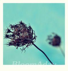 fleur hivernale/ blue winter bloom