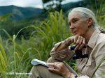 Η ΣΟΦΙΑ ΣΤΑ ΛΟΓΙΑ ΤΗΣ JANE GOODALL Jane Goodall