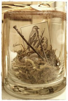 bird in a jar