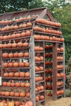 cool pumpkin display!