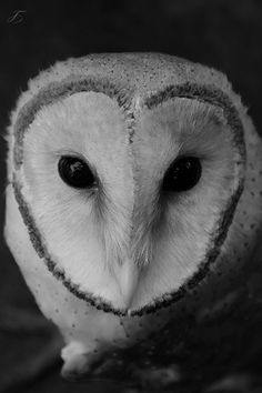 """Can you free me""... Barn Owl by ©‎ Renjith Rajan Pillai. °"