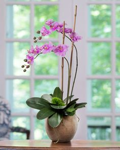Greenhouse Phalaenopsis<br>Faux Orchid