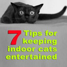 Aug 1 Keep indoor cats entertained