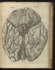 "Chocolate :"" Descartes: view of posterior of brain, from De Hominem. Wellcome Collection"". Tracing the edges of consciousness Posted on February 4, 2016. https://neurobanter.com/"