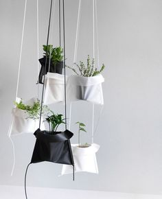 A Simple Solution for Hanging Your Plants – Design Milk – Garden Green Plants, Potted Plants, Indoor Plants, Air Plants, Cactus Plants, Diy Planters, Hanging Planters, Planter Ideas, Hanging Gardens