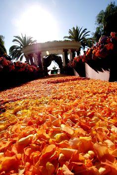 Ceremonies   Square Root