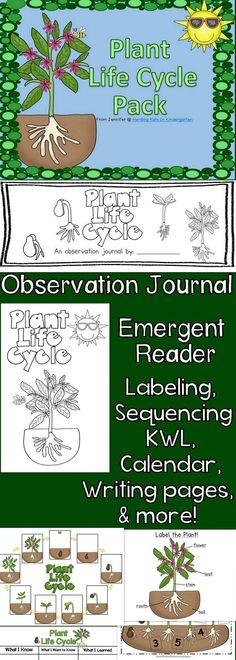 Plant Life Cycle Unit - everything you need including student observation journal, emergent reader, KWL chart, labeling pages and sequencing sheets & more!
