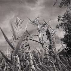 Ein Sommertag in schwarz-weiß auf der Insel Rügen.