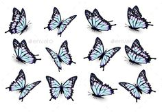 Collection Of Blue Butterflies. Vector by almoond | GraphicRiver
