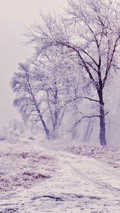 Winter Path Trees Landscape #iPhone #5s #wallpaper