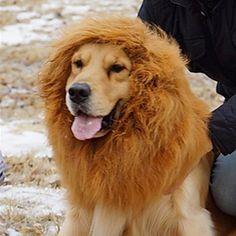My Lion!!! LOL