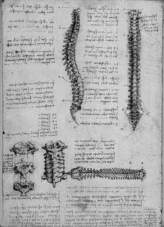 chaosophia218:  Anatomical studies and drawings by Leonardo da Vinci. | Fresh Photons