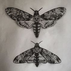 Would love to tattoo the top death moth, the one underneath .- Would love to tattoo the top death moth, the one underneath has already gone… - Luna Moth Tattoo, Little Tattoos, Love Tattoos, Body Art Tattoos, Tatoos, Moth Tattoo Design, Tattoo Designs, Tattoo Ideas, Ink Art