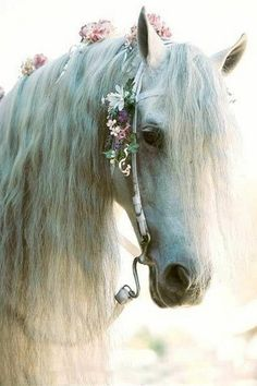 Beautiful White Horse Laced With Delicate Pink Flowers in Her Mane.