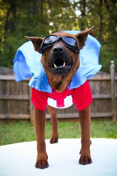 """Underdog - Halloween Pet Parade - Southernliving. Big Red    Owner: Larkin Willis  """"Someone point me in the right direction so I can save the world because I can't see a thing through these goggles."""" —Cheryl Romer Booe, winner of our Facebook caption contest"""